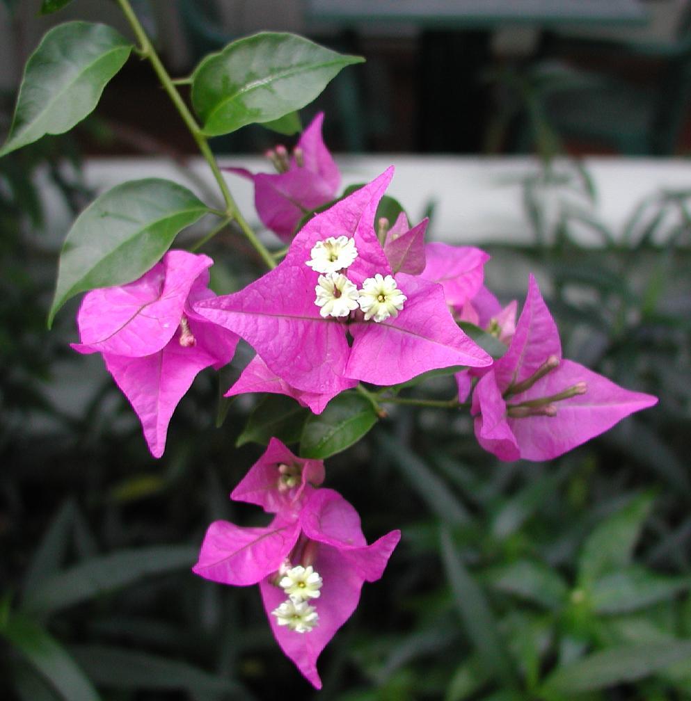 Flora Amp Fauna Of St Lucia